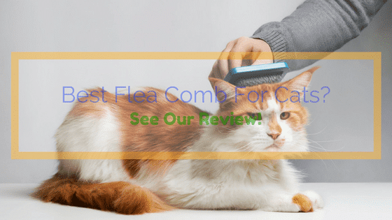 Best Flea Comb For Cats