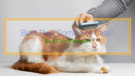 Best Flea Comb For Cats