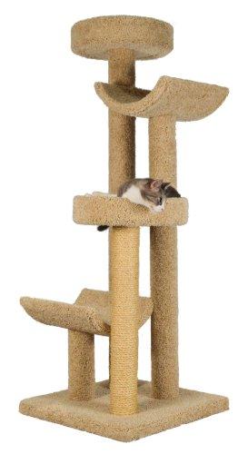 Best Cat Perch  Inches