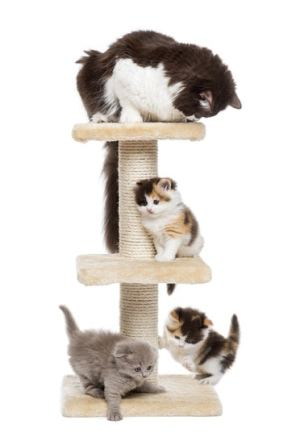 cat trees are lovely