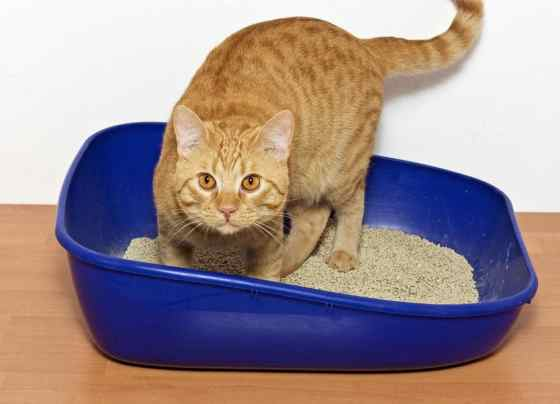 Best Clumping Cat Litter Review Your Cats Will Love It