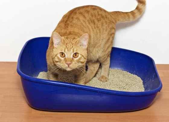 cat using a clumping litter