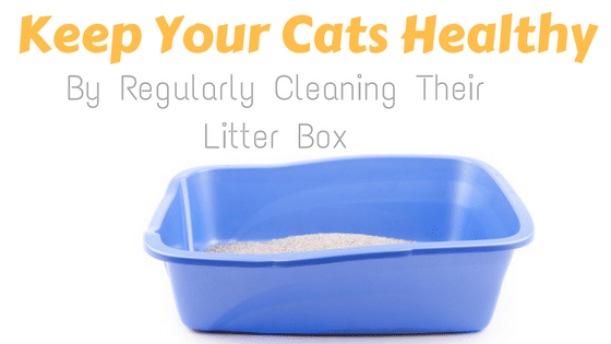 How to clean a cat litter box