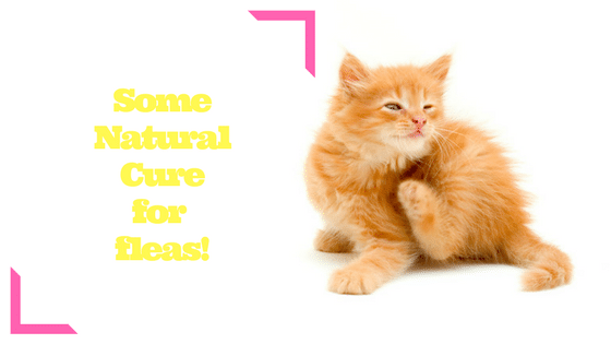 Some NaturalCure for fleas!