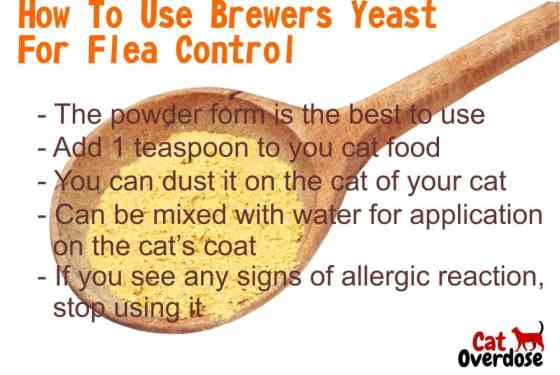 brewers yeast for flea control