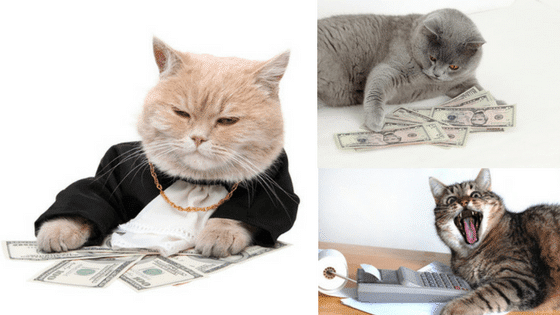 cost of owning a cat