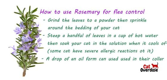 rosemary for flea control on cats
