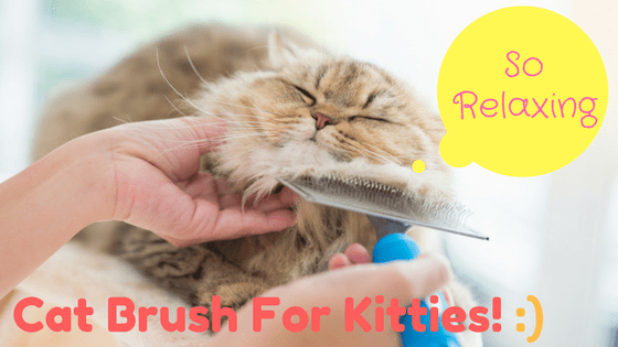 Best Cat Brush