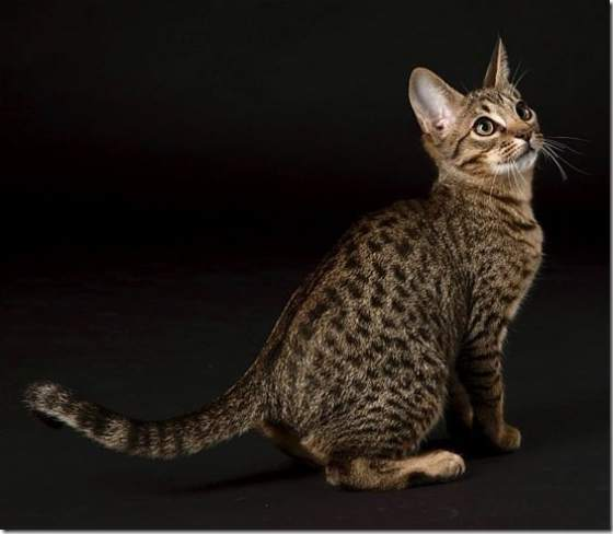 Cat Breed, What Makes ...