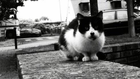 Charlie, un chat vivant depuis longtemps à l'éterieur