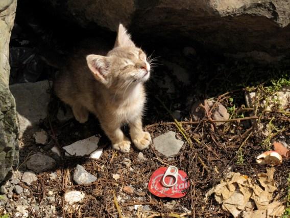 chaton sans abris