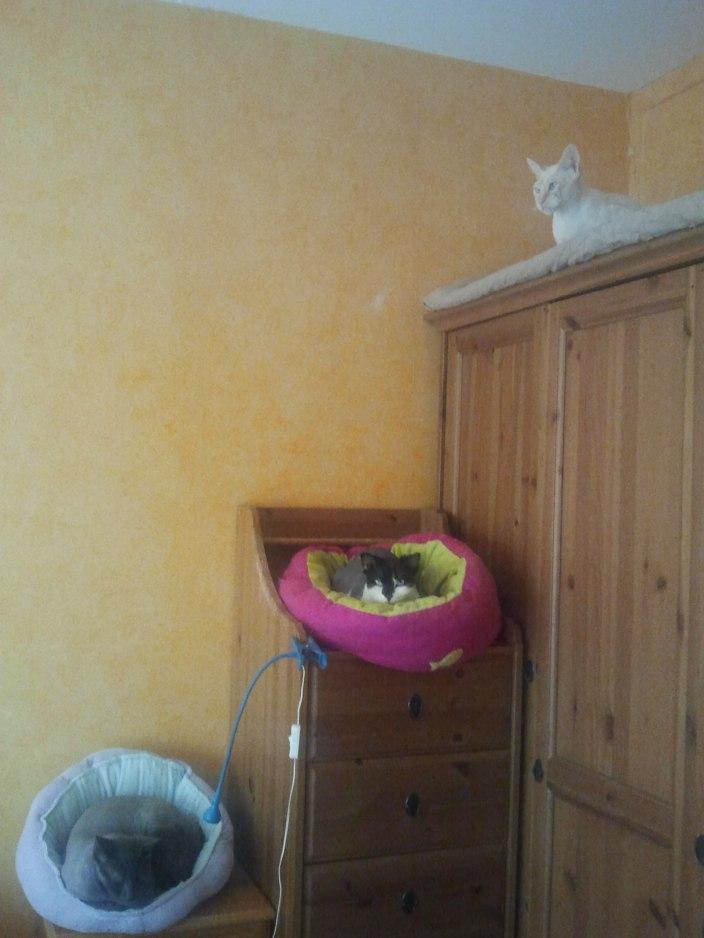 petits lits chats
