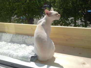 Lilou sur le balcon
