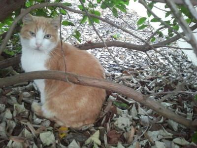 Pioupiou, chat libre soigné par la naturopathie