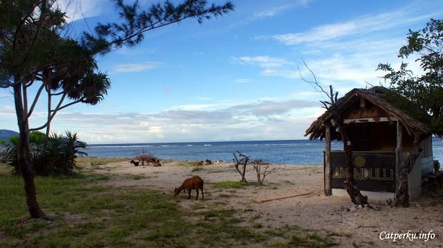 Saya pun bertanya - tanya, entah bagaimana kambing - kambing ini bisa sampai pulau ini :D err... lupakan..