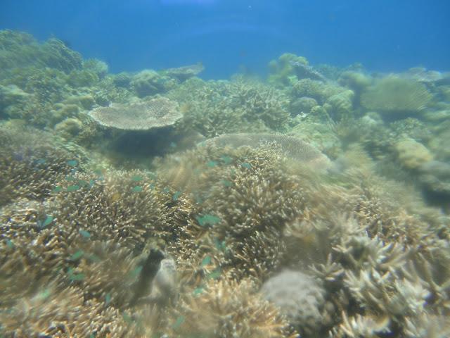 Mungkin terumbu karang ini adalah rumah ikan - ikan itu tadi :D
