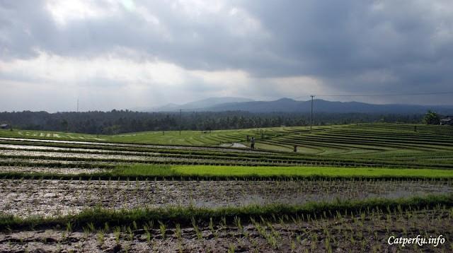 Sadarkah kalau kita ini sebenarnya adalah negara agraris? Negara yang seharusnya bisa kuat karena hidup berdampingan dengan alam.