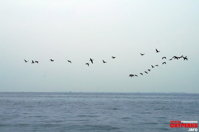 Main ke Pulau Untung Jawa itu seruu, apalagi kalau pulangnya disambut sama sekawanan burung seperti ini! :D