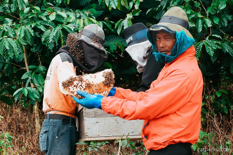 Aktifitas panen lebah madu di Desa Sumber Urip bisa menjadi kegiatan yang menyenangkan.