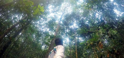 Bertamu Ke Rumah Orang Utan Di Kalimantan, Taman Nasional Sebangau