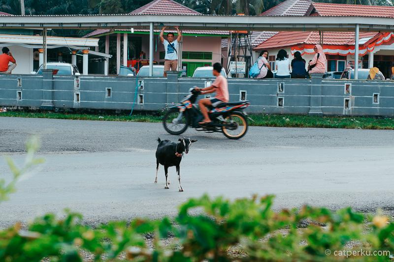 Desa Kota Bani ini menduduki peringkat ke-6 pada daftar Indeks Desa Mandiri se-Indonesia.