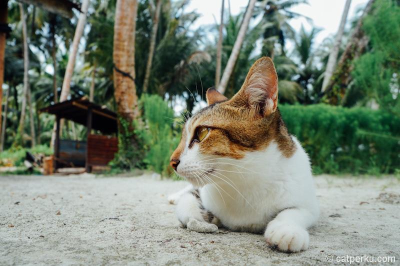 Dia lagi malu-malu kucing! Eh, emang kucing sih! :p