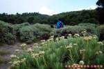 Padang edelweis seperti ini hanya bisa ditemui juga jika naik lewat tanjakan batu.