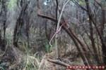 Karena jalur awal sebelum menanjak melewati bebatuan adalah hutan, cari tanda seperti ini untuk mencari jalur.