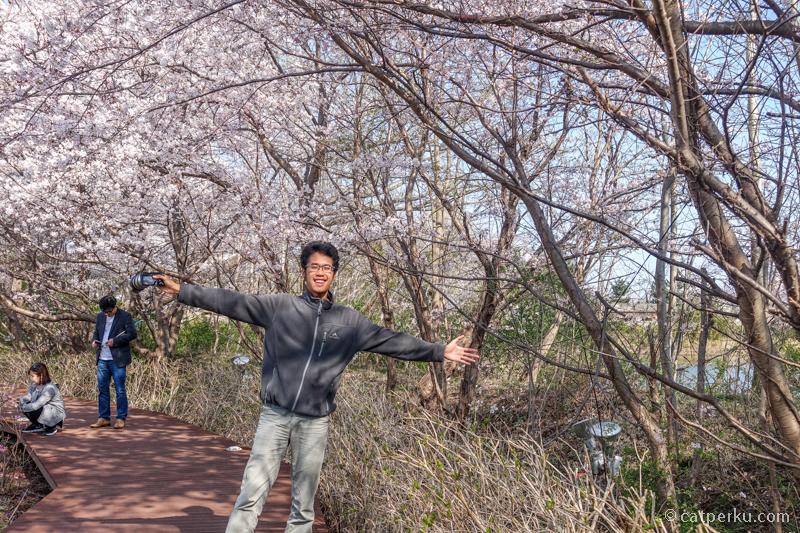 Hey! Ternyata ada juga Bunga Sakura di Korea Selatan!