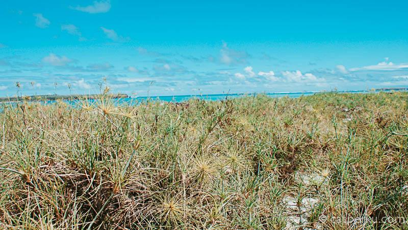 Jadi ceritanya saya menemukan yang namanya Pantai Cemara ini secara tidak sengaja. Lho, gimana?