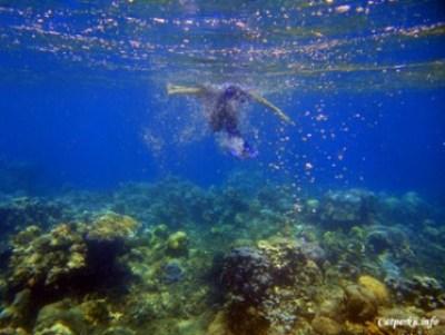 Sebagian terumbu karang Jemeluk Bay, dalam kondisi telah mati, tapi tetap menyenangkan untuk berenang disini.