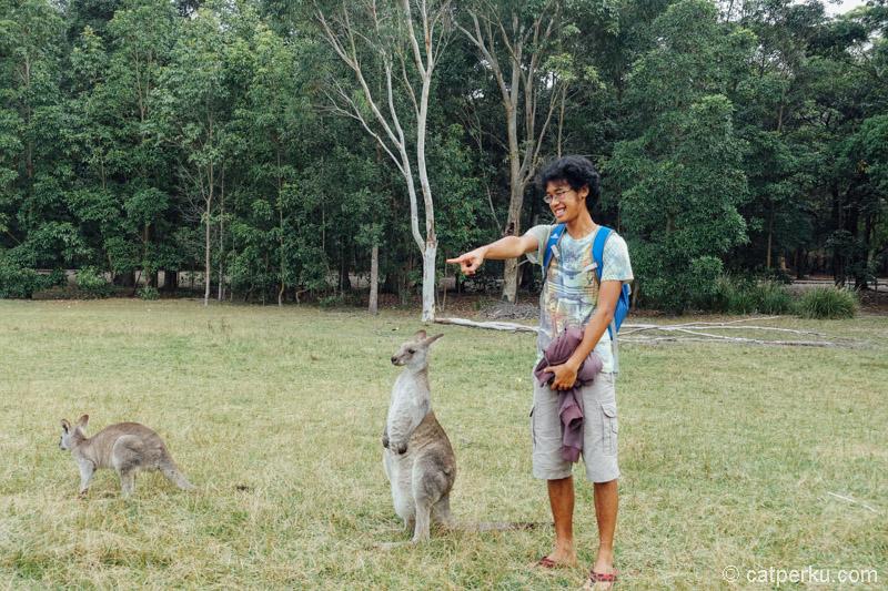 Kapan lagi bisa sedekat ini dengan kanguru?