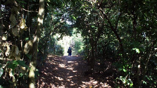 Ada satu sudut di Uluwatu, yang harus melewati jalan seperti ini.