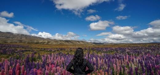 New Zealand, negara fotogenik di belahan bumi selatan