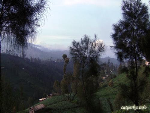 Begitu segar, begitu alami, masih di desa Ngadas, Bromo Tengger Semeru, National Park