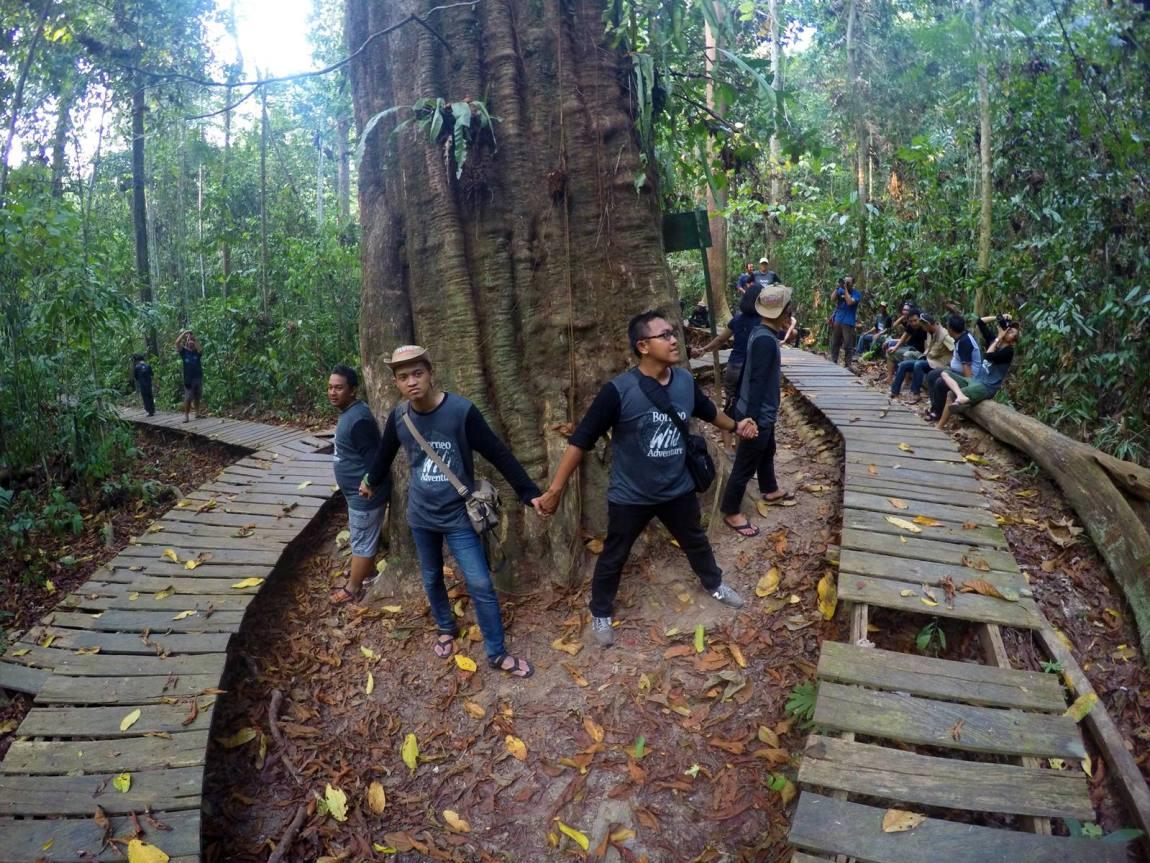 Perlu 8 orang untuk melingkari Kayu Ulin raksasa di Taman Nasional Kutai!