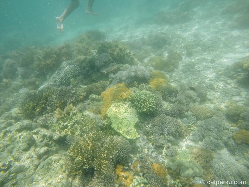 Pemandangan bawah air Pink Beach Flores