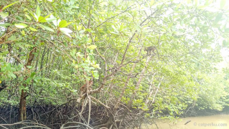 Penghuni Kilim Geoforest Park ini salah satunya adalah monyet ekor panjang