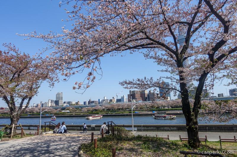 Piknik di Taman Sumida ini asik lho, apalagi pas musim semi!