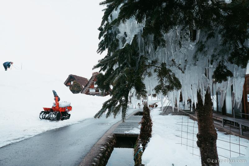 Pohon disini pun sampai membeku dan ada esnya!.