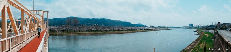 Sakura di Tensochi Park yang berada di tepi sungai Kitakami