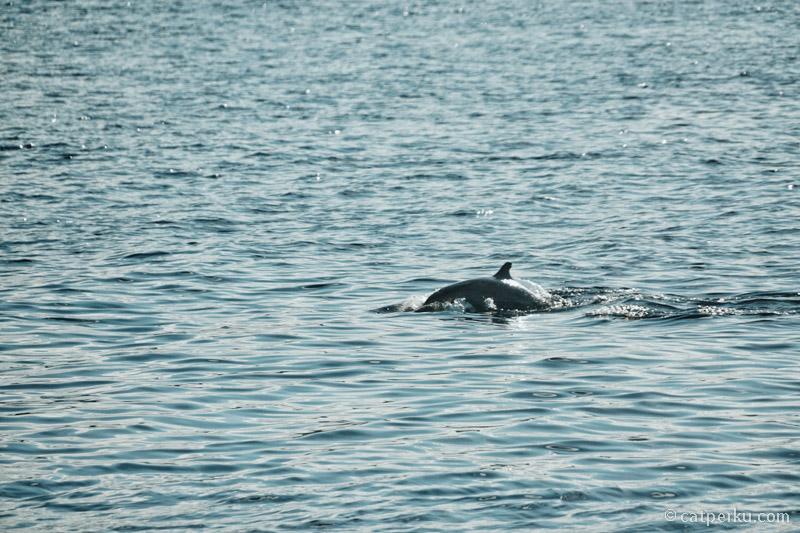 Siapa sangka kalau di Wangi Wangi bisa melihat lumba-lumba.