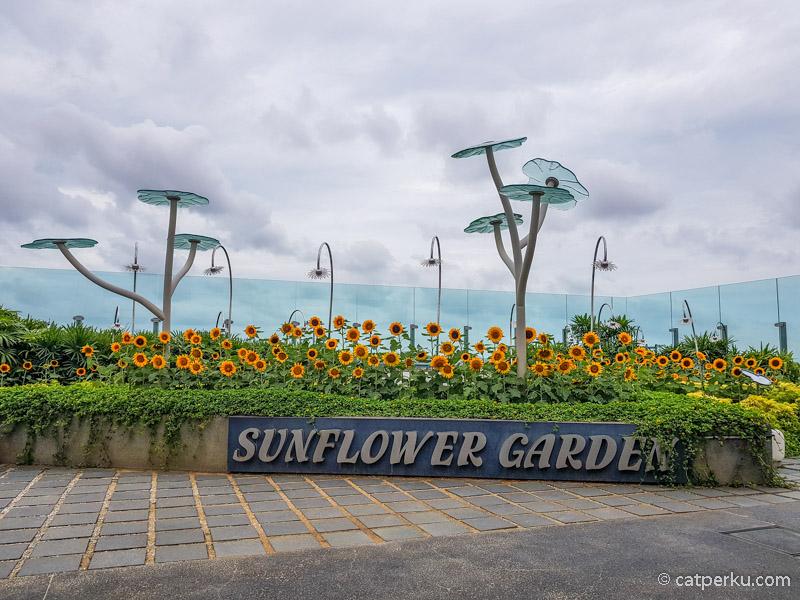 Taman Bunga Matahari di Changi ini bisa menarik minat para penumpang yang sedang transit menunggu pesawat terbang lanjutan