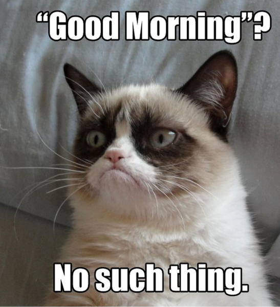 Good Morning? Cat Meme - Cat Planet   Cat Planet