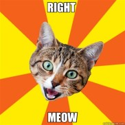 Image result for right meow