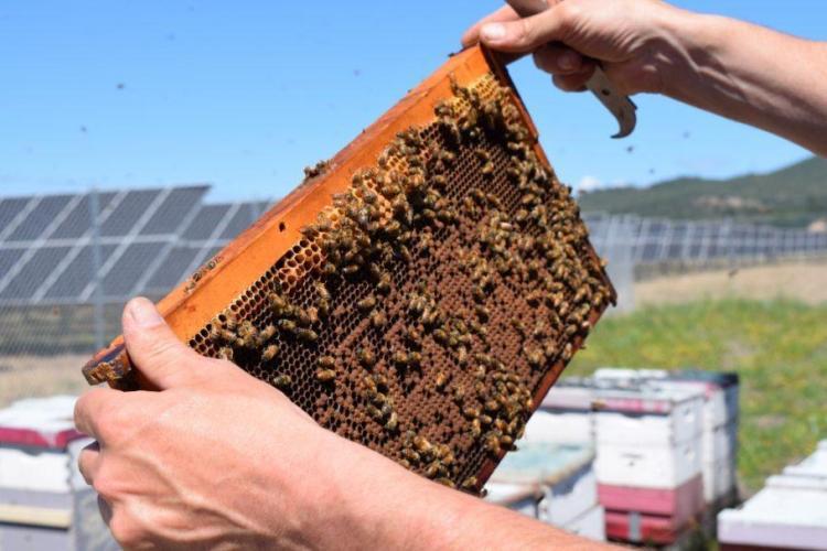As colmeias foram instaladas no entorno dos painéis solares