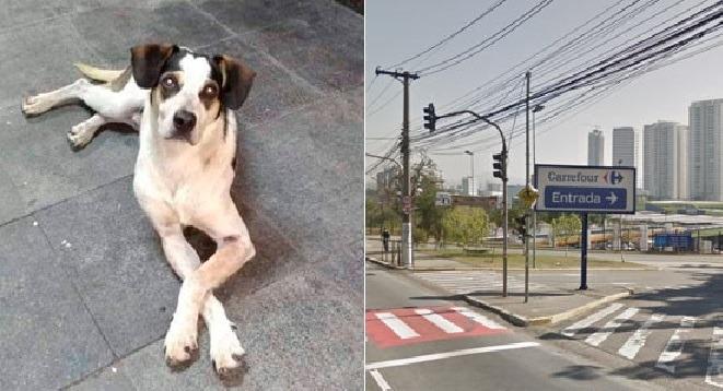 Morte de Cão no Carrefour