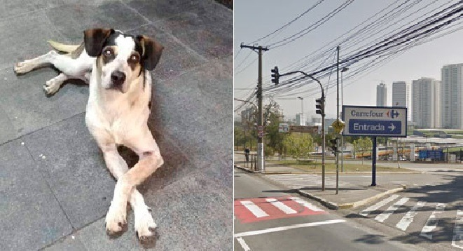 Morte de Cão no Carrefour