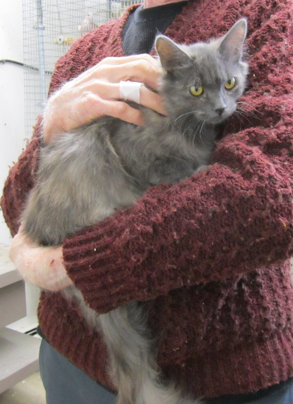 The beautiful Venus DeCoco was a feral kitten when she arrived