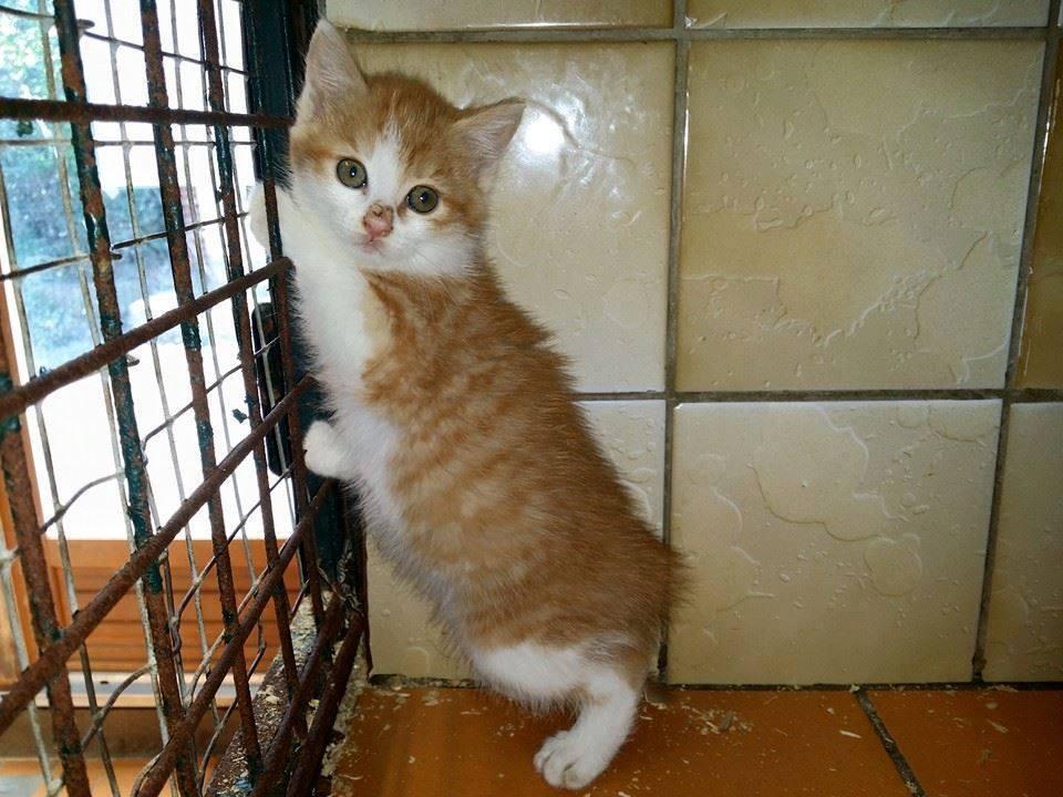 s p a carcassonne cat rescue carcassonne